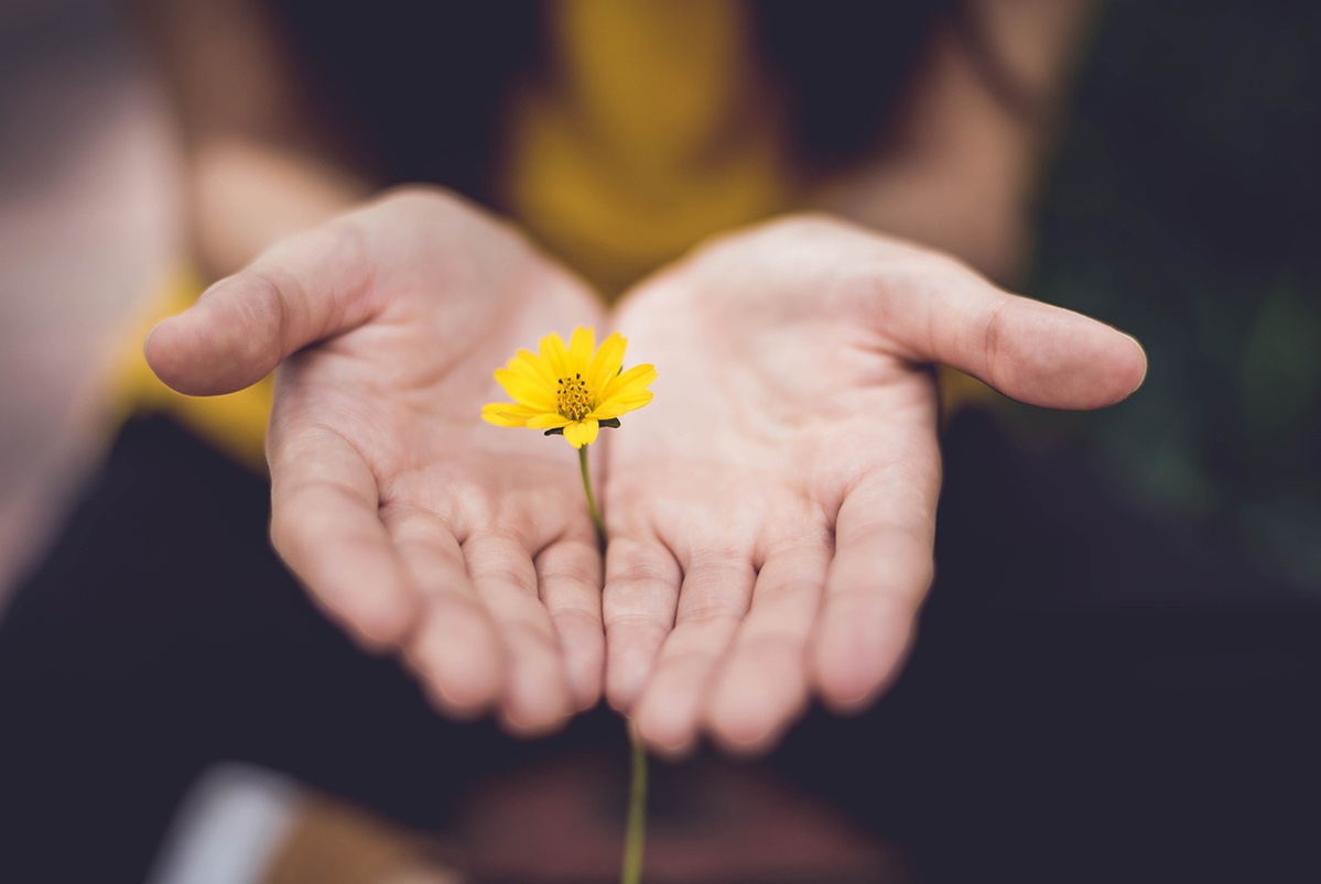 Two hands holding yellow flower in show of support